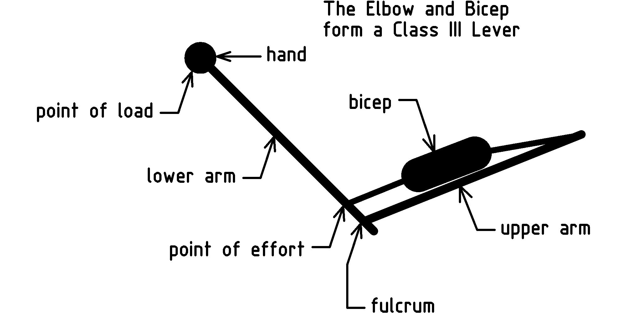 Forces Work And Simple Machines